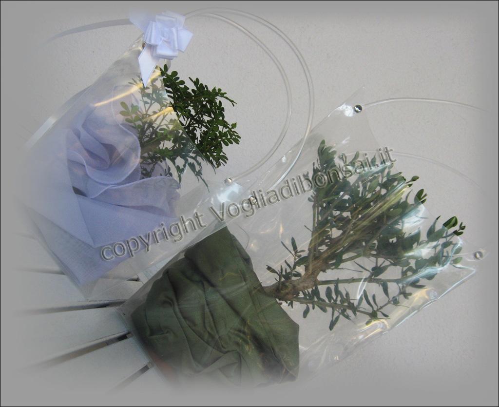 Matrimonio Bomboniere : Bomboniere matrimonio vogliadibonsai bonsai
