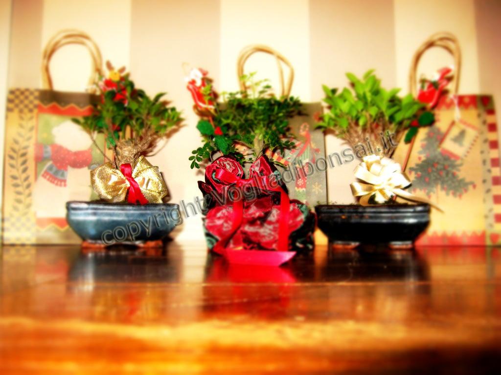 Bonsai per Natale