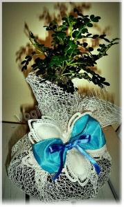 bomboniera bonsai sogno