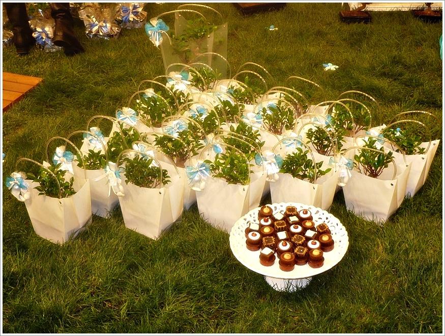 Molto bomboniera bonsai | Vogliadibonsai.it - Bomboniere Bonsai | Pagina 5 PF19