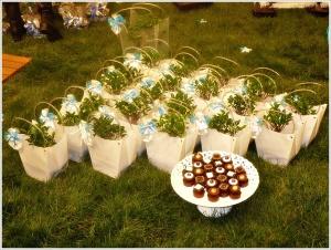 bomboniere bonsai sul prato
