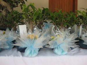bomboniere con bonsai