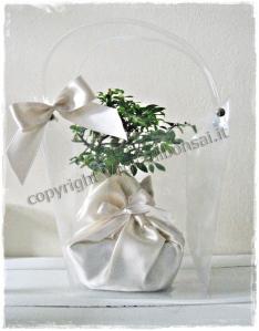 bonsai per bomboniere