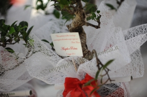 bomboniere bonsai, matrimonio originale