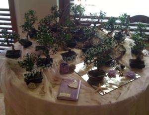 bomboniere mini bonsai