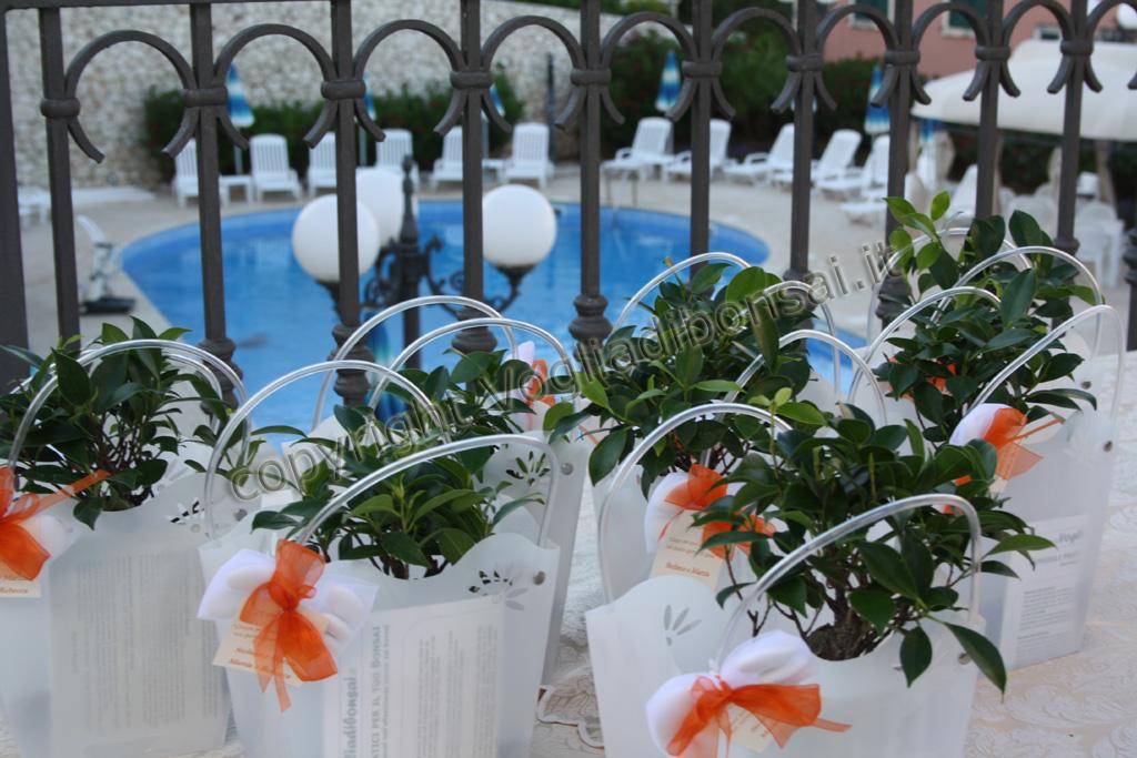 Super Bomboniere Bonsai, Matrimonio Stefano e Marzia – Puglia 2011  XP86