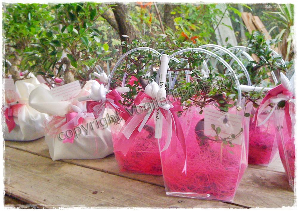 Bomboniere bonsai realizzate per il matrimonio di brunella for Sito per regalare oggetti