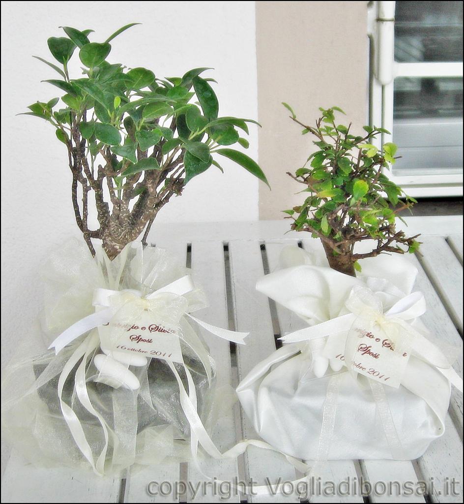 Piante Bomboniere Solidali: Bomboniere bonsai per battesimo vogliadibonsai. P...