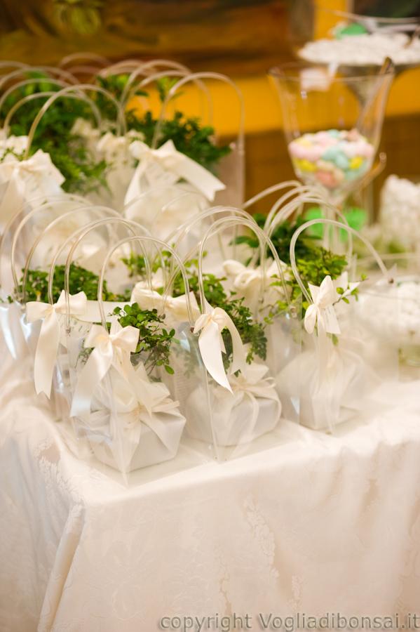 Tema Matrimonio Wordpress : Dsc vogliadibonsai bomboniere bonsai