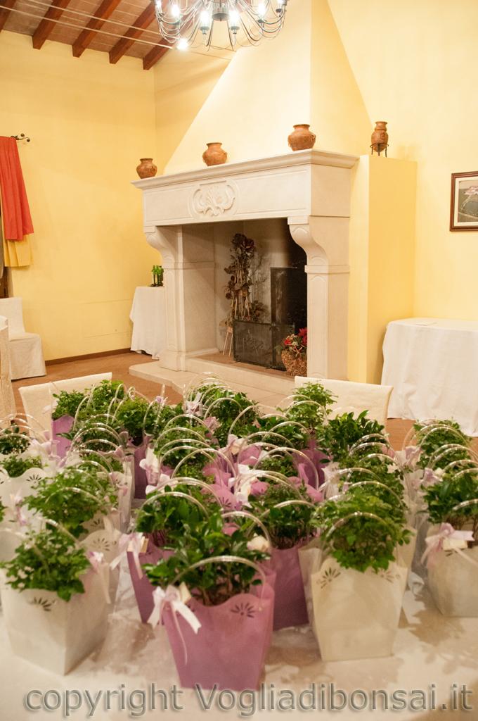 Bomboniere bonsai per il matrimonio di luca e francesca bomboniere bonsai - Idee originali per segnaposto matrimonio ...