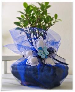 Bomboniere bonsai per battesimo