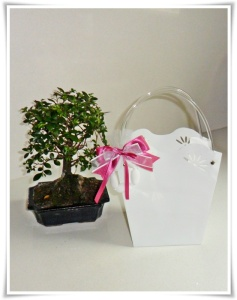 Bomboniera bonsai con shopper