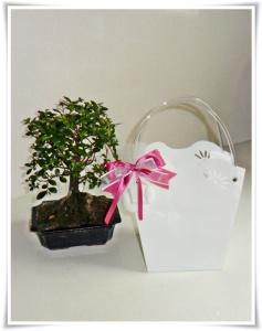Bomboniera bonsai con shopper