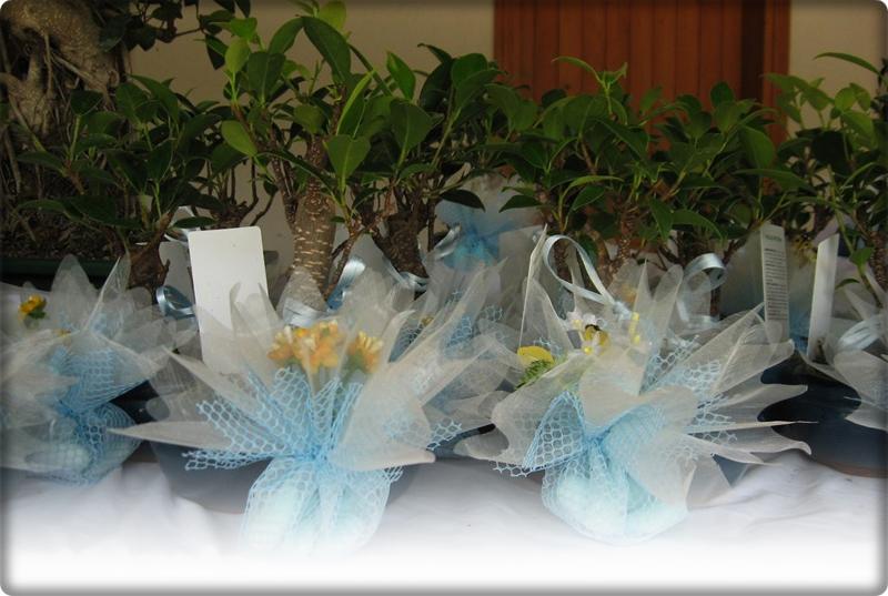 Bomboniere con mini bonsai