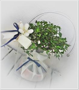 Bonsai confezionati per matrimonio