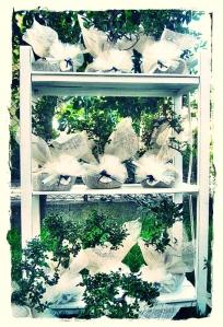 Bomboniere bonsai e juta