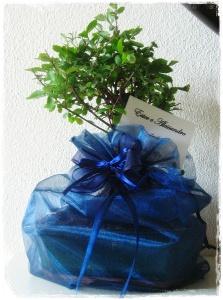 Bomboniera bonsai per Ester e Alessandro