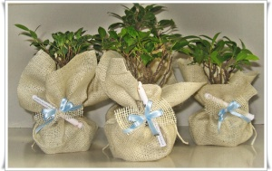 Bomboniera eco friendly con bonsai
