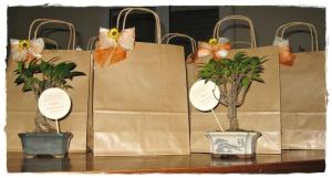 Bomboniere bonsai per Comunione