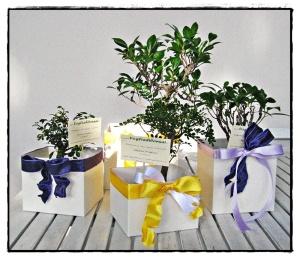 Bomboniere bonsai in scatola