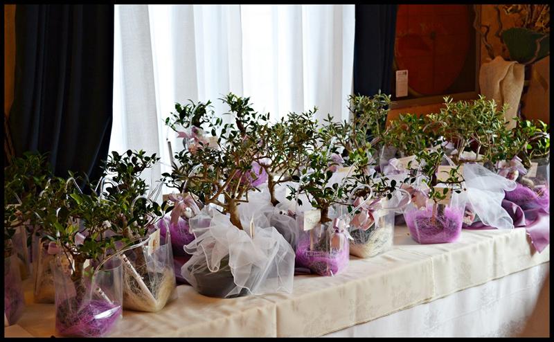spesso bomboniere solidali matrimonio | Vogliadibonsai.it - Bomboniere Bonsai VF53