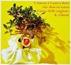 Bomboniera bonsai raffinata e originale