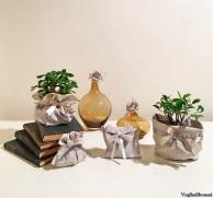 Bomboniere bonsai per matrimonio