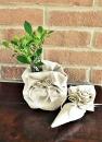 Bonsai confezione natura
